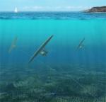 aquiloni sottomarini - il blog di Sorgenia - img da rinnovabili.it